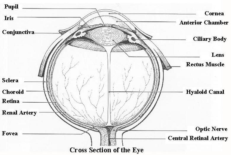 eyech1-a html