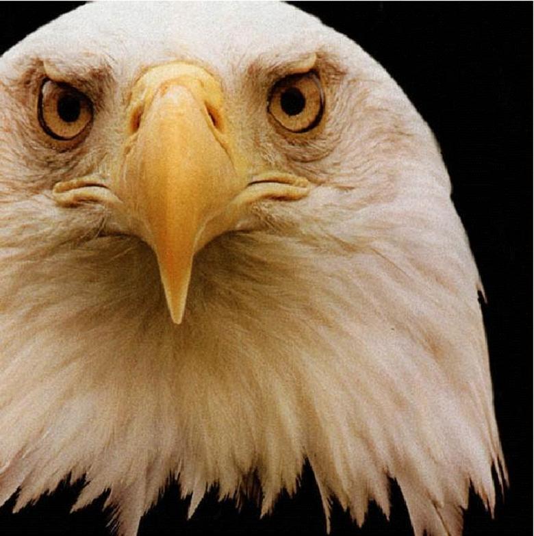 Image result for eyesight of eagle