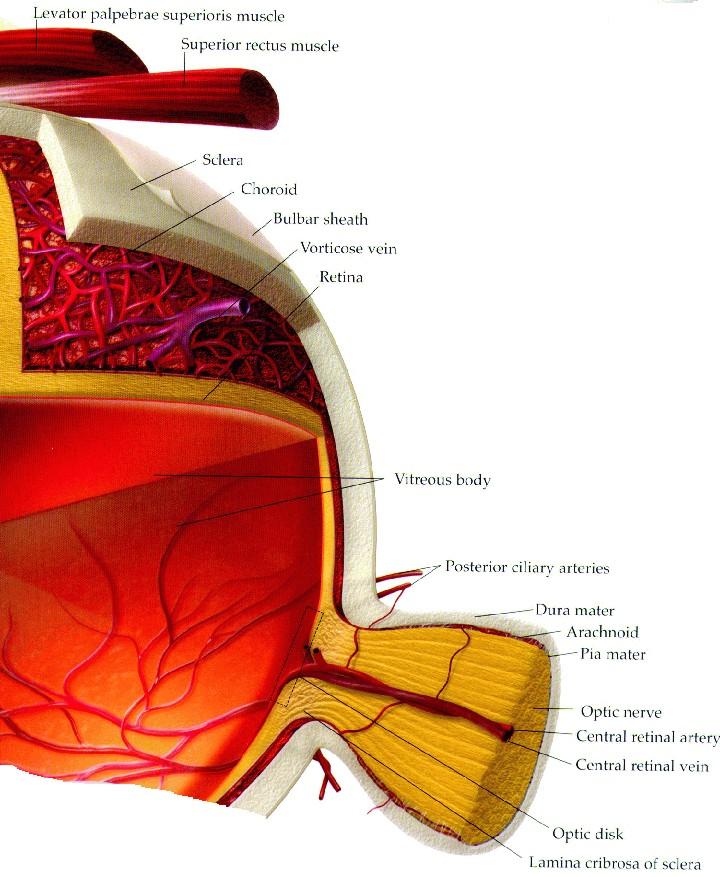 Eyech3 Iml