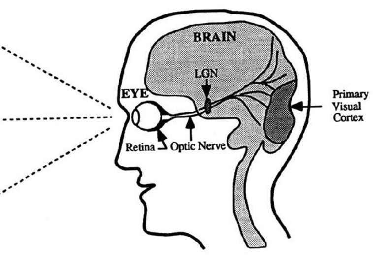 Eyech4 aml fig4 01tnreg biological vision design diagram 300x200 ccuart Gallery